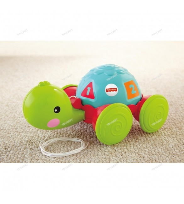 Pull-Along Turtle